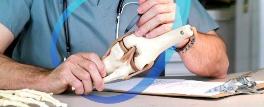 blog-anatomy-of-the-knee-the-role-of-the-knee-ligaments